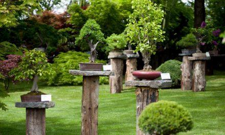 Bonsaje v Botanické zahradě Praha – Troja