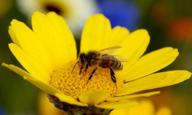 Letem včelím světem – výstava v Jihočeském muzeu