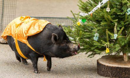 Štědrý den a vánoční svátky v Zoo Praha