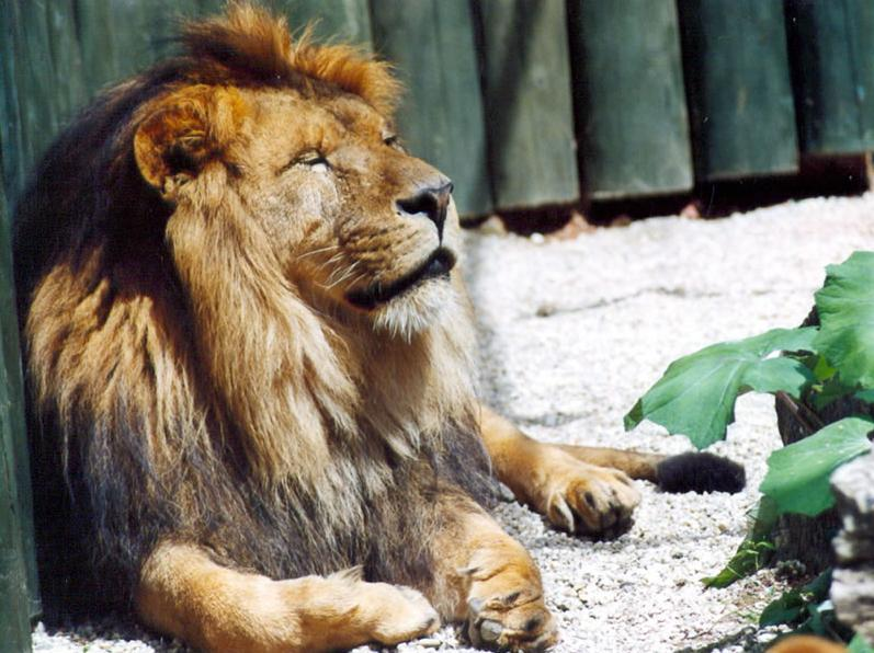 Adventní Zoo Liberec